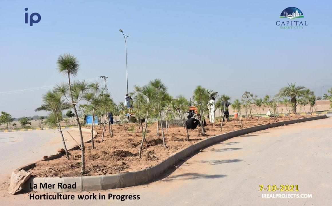 La Mer road plantation - Capital Smart City
